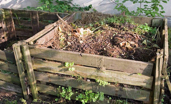 What to Do with Your Compost